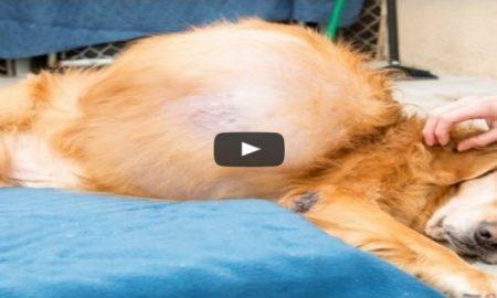 dog-tumor