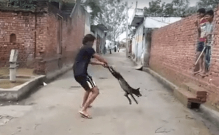 [WATCH] The INTERNET Hunt Is ON For The Man That Brutally Beat This Helpless Dog