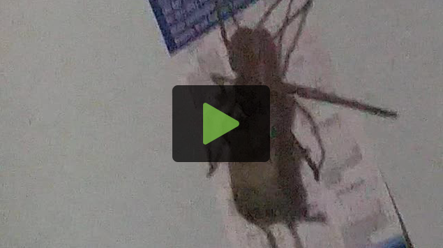 This [VIDEO] Of A Spider Eating A Mouse Is Horrific