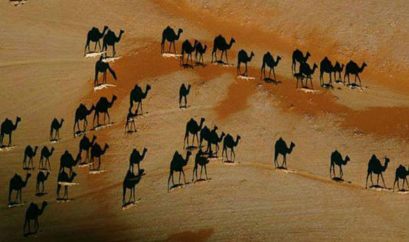 This PHOTO of Camels Is Going Insanely VIRAL, Look Close and You'll See Why