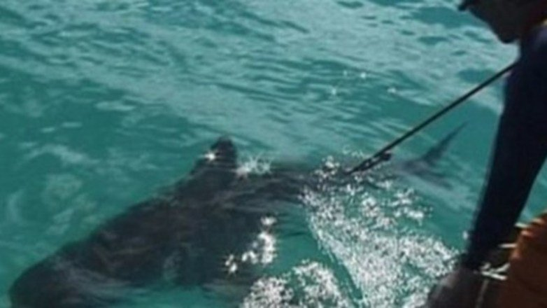 Scientists On The Hunt For 'Super-Predator' That Ate 9-Foot-Long Shark (Video)
