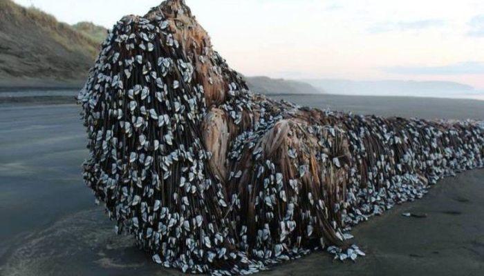 barnacle-covered-log