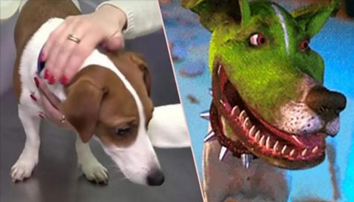 Family Dog Given PLASTIC SURGERY To Look More Like Dog From 'THE MASK'
