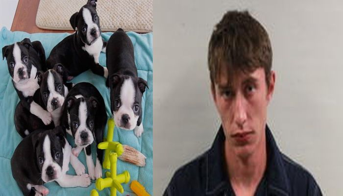 Animal Rescuer Prepares To Save Puppies, Then Notices What A Man Did To Them