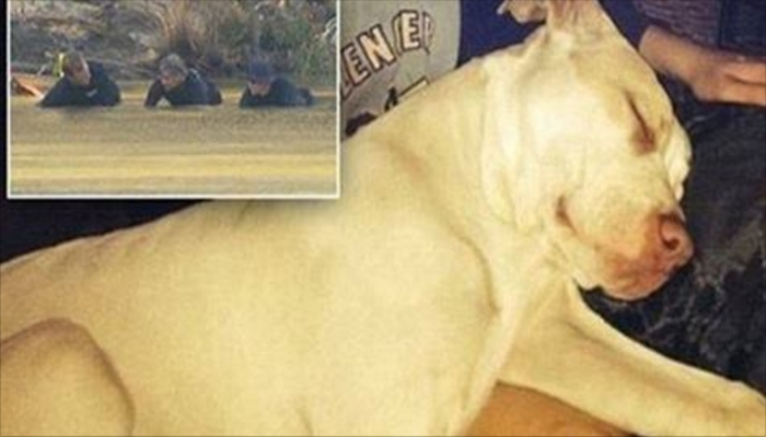 Pit Bull That Saved Little Boy And MAULED Mom Who Threw Him In The River Learns Fate