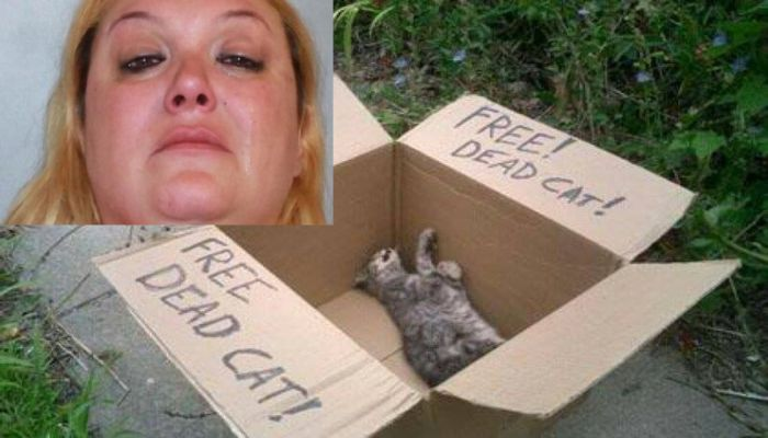 Woman Stomps Kitten To Death And Gives The Reason, Should She Be Jailed?