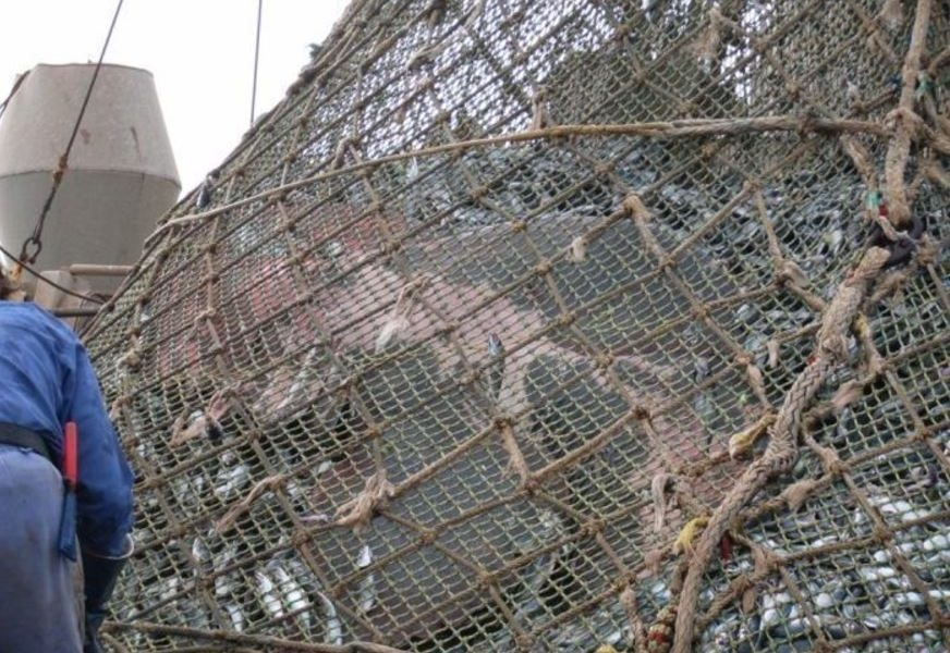 These Fishermen Found Something Unexpected In Their Net
