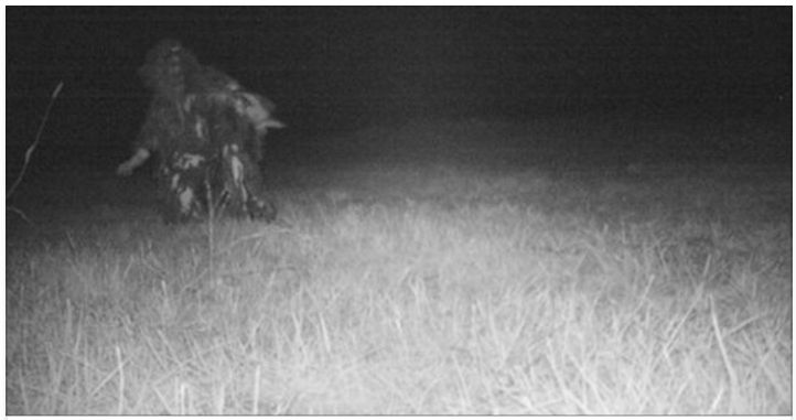 Police Setup Camera To Catch Mountain Lion, See Something That Freaks Them Out
