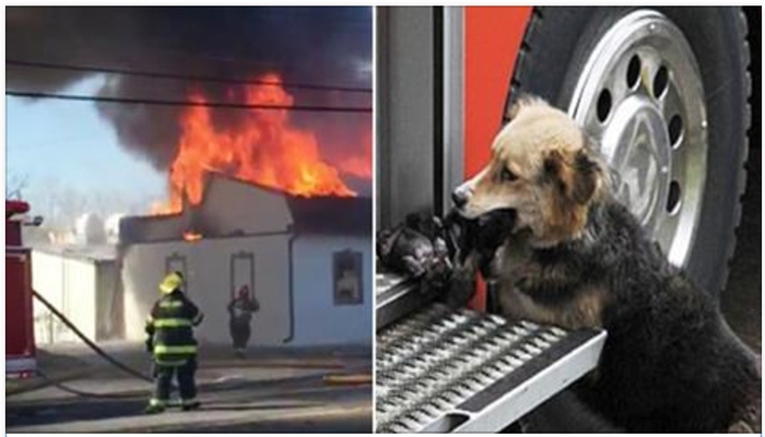 Firefighters Rush To Put Out Fire, Notice Dog Run Out Holding Something In Her Mouth