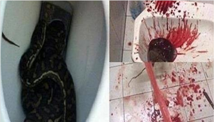 Man Experiences Every Person's Worst Nightmare While Sitting On The Toilet