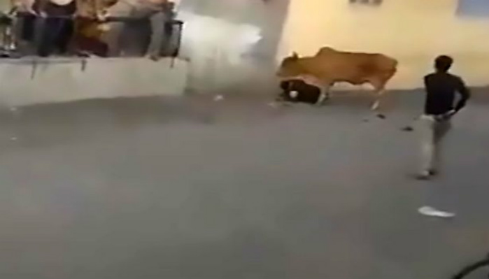 """Mad Cow"" Violently Attacks Man In Street As Horrified Onlookers Attempt Rescue [RAW VIDEO]"