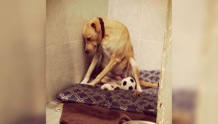 Dog Has 2-Weeks Until It Is Forced Out Of Foster Home, So Rescue Agency Makes Plea On Social Media [PHOTOS]