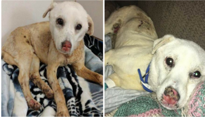Puppy Thrown into Fire Pit and Left for Dead. Family Desperately Seeks Help To Save Him. [PHOTOS]