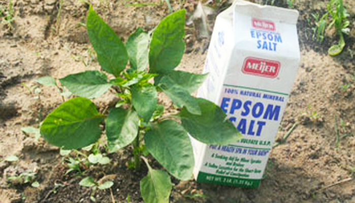 Gardener Uses Epsom Salt In Ways I Never Thought Of. These Tips Can Help Any Garden