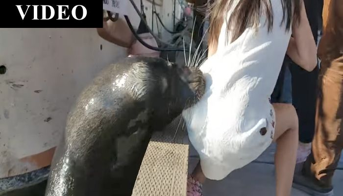 "Family Watches In ""SHOCK"" As Sea Lion Drags Little Girl Into Water"