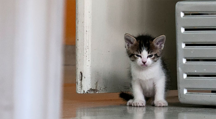 Who Doesn't Love Angry Kitten Pics? [PHOTOS]
