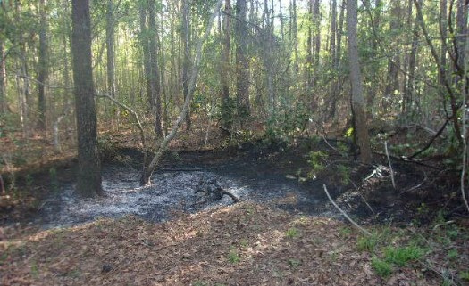Three Children Arrested For Dragging, Torturing And Burning Dog Alive In The Woods