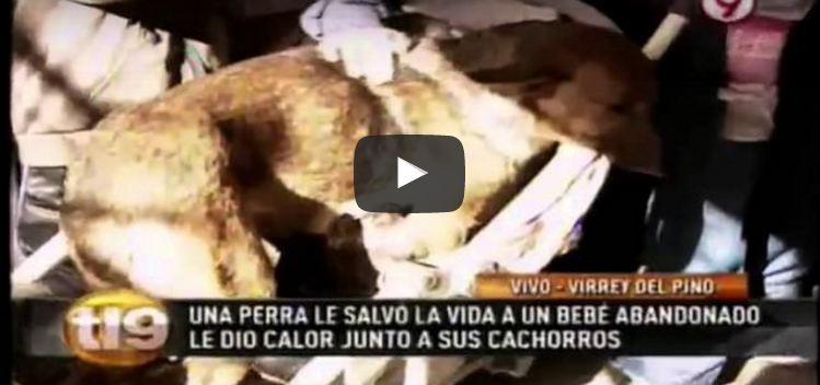 Stray Dog Discovers Abandoned Human Baby, Then Her Maternal Instincts Kick In [VIDEO]