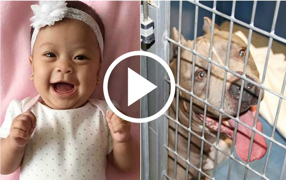6-Month-Old Baby Girl Eaten Alive [VIDEO]