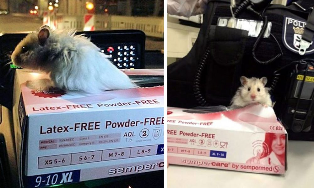 Officers Find A Scared, Lost Hamster, Decide To Honor Him In A Way No Hamster Has Been Honored Before