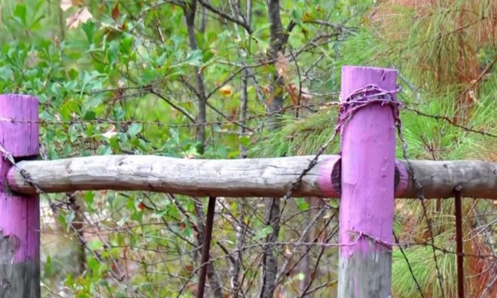 If You Spot Purple Fence Posts, You Need to Get Away As Quickly As Possible [VIDEO]