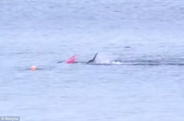 Watch the Moment Great White Shark Attacks Kayaker [GRAPHIC VIDEO]