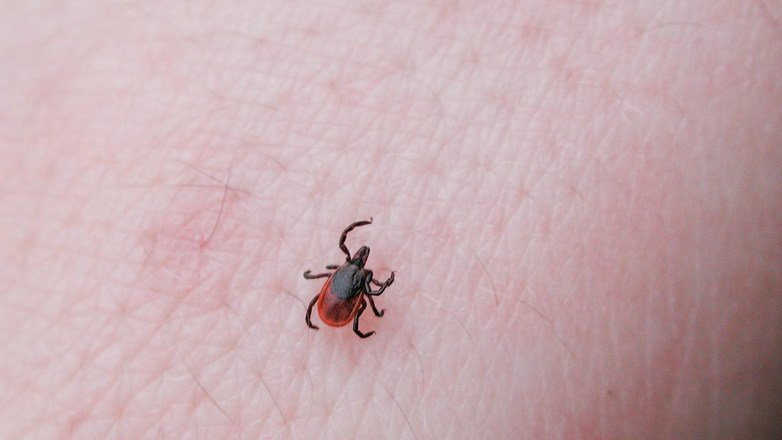 If You Get Bitten By A Tick And Have This Symptom, You Could Die From It