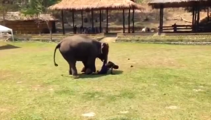 """Man """"Attacks"""" Caretaker Of Elephant Sanctuary. Now Watch As Elephant Comes To The Rescue [VIDEO]"""
