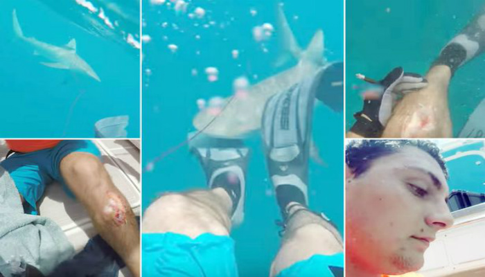 Watch The Frightening Moment A Diver Is Suddenly Attacked By A Man-Eating Shark [VIDEO]