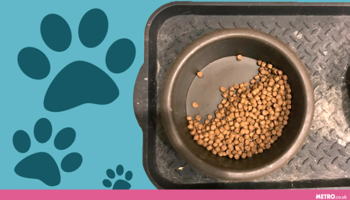 Bowl Of Half-Eaten Dog Food Has A Heartbreaking Backstory [PHOTOS]