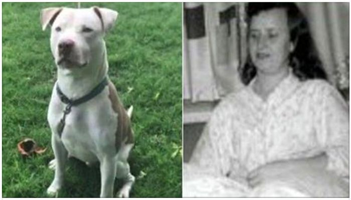Elderly Woman, 91, Adopts Dog Only To Be Mauled To Death Hours Later