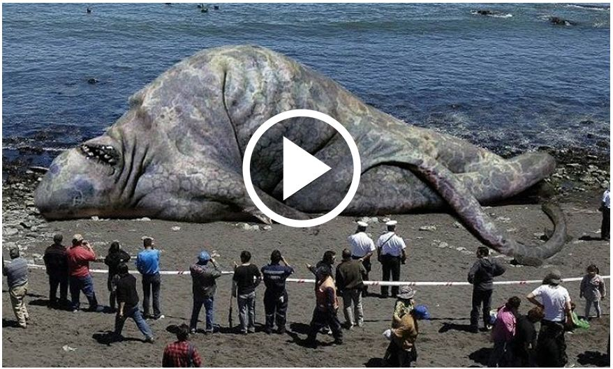 Huge Animals That You Didn't Think Existed, That Are Actually Real [VIDEO]