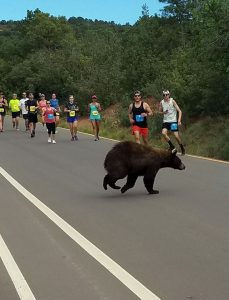 bear-in-race