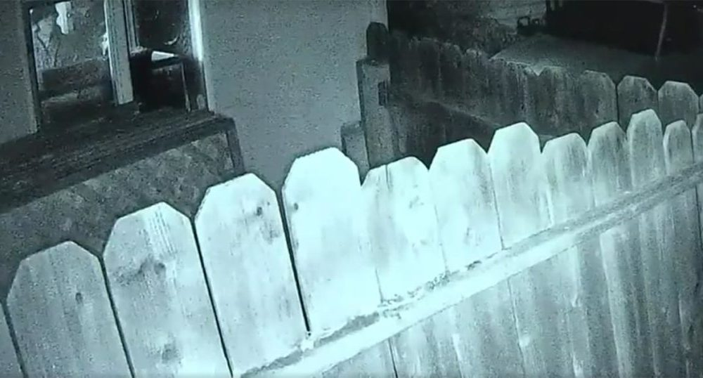 Burglars Insist Homeowner Unlock Gun Safe: A Mistake They Don't Live to Regret
