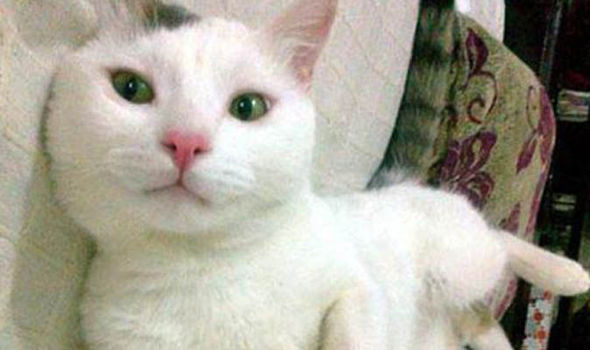 Minnos the cat reportedly saved her