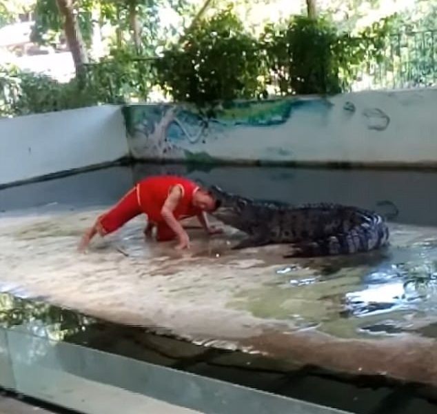 Man Puts His Head in Crocodile's Mouth: Then it Happens [VIDEO]