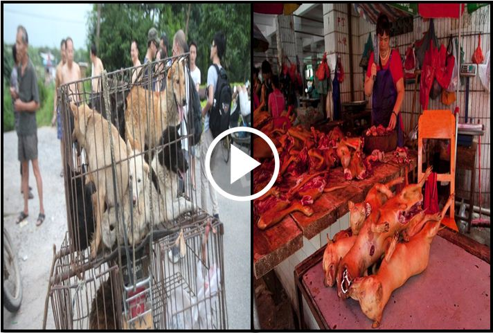 People See Hundreds Of Dogs Smashed Into Cages, Realize What's About To Happen And Take Action [VIDEO]