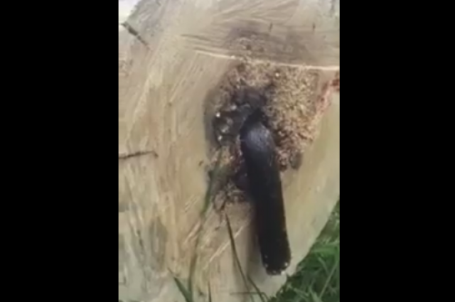 Man Cuts Tree Down and Finds Terrifying Creature Inside! [VIDEO]