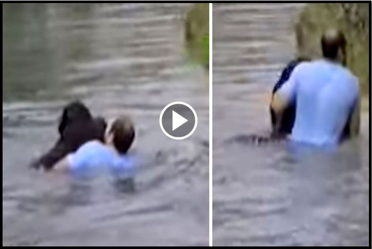Zoo Staff Makes No Effort To Save Drowning Chimp, Suddenly Man Jumps Into Action [VIDEO]
