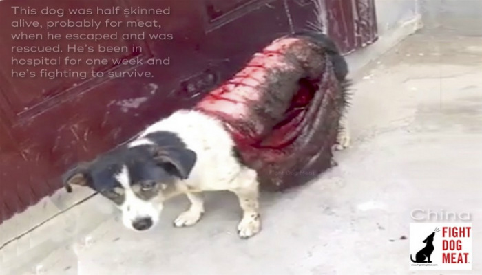Dog That Was Skinned Alive Discovered On The Road Gets Rushed To Hospital [GRAPHIC PHOTOS]