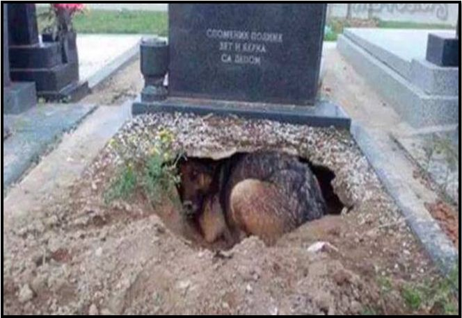 People Said This Dog Was Guarding Her Owner's Grave, But They Uncovered A Stunning Secret
