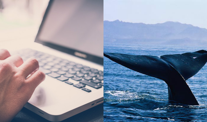 If You Hear Your Kids Say The Words 'Blue Whale', Stop Them Before They're Dead [VIDEO]