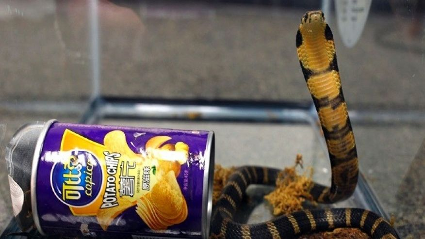 You Never Know Where Those Snakes Will Turn Up