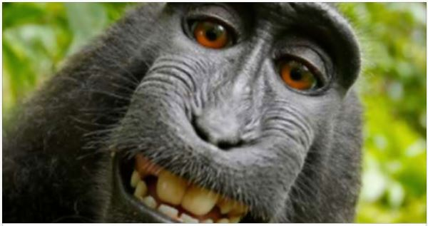 PETA Sues Man Into Bankruptcy Over Ownership Of Monkey Selfie Taken On His Camera