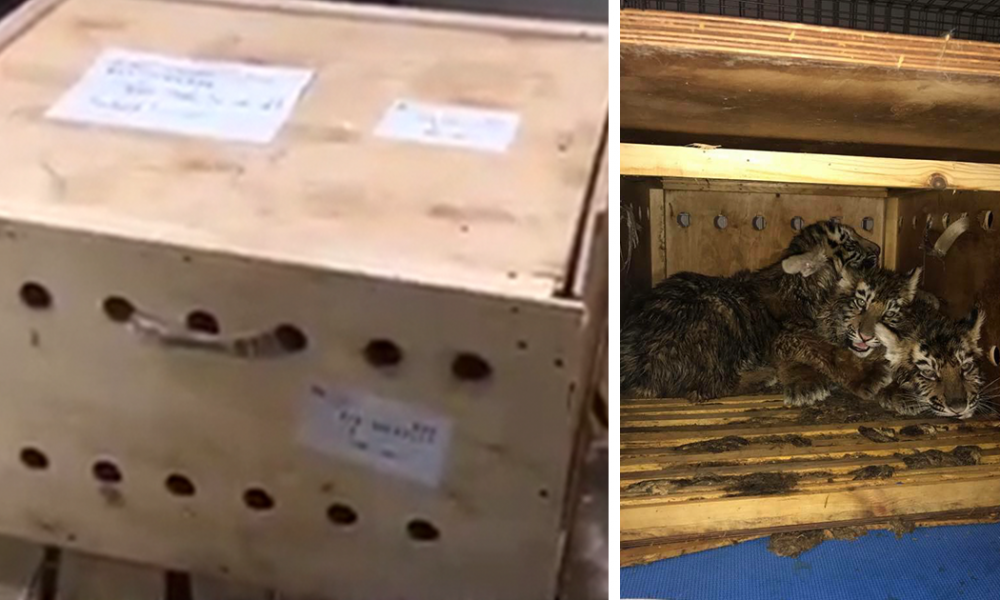 Strange Box Sat At Airport For 7 Days Until Someone Finally Helped Release What Was Trapped Inside