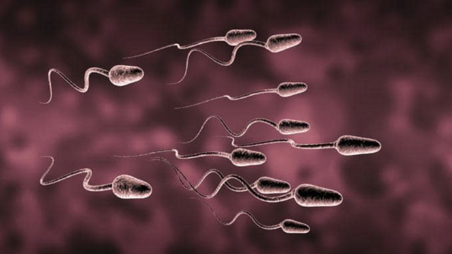 Will Reproduction Stop Entirely?  Male Sperm Count Has Been Cut In Half Over Four Decades